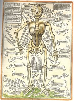Anathomia ossium corporis humani, the oldest surviving anatomical rendering of the human skeleton.  Apparently this caused an uproar in the science world after nearly eight centuries of repression by religious groups that maintained hegemony throughout the dark ages.  Hieronymus Brunschwig, 1497.