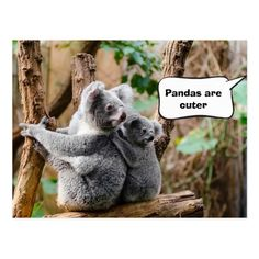Pandas or Koalas - Which are cuter? Postcard