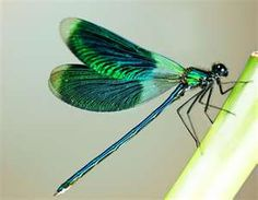 I love dragonflies and butterflies