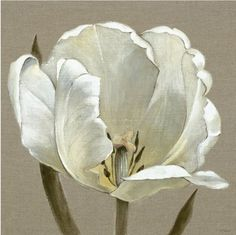 Linen Tulip by Adelene Fletcher, available as Box canvas. ✅FREE DELIVERY✅ on prints & sculptures orders over Art Connection, Beautiful Flowers Wallpapers, Leaf Wall Art, Flower Wallpaper, Flower Photos, Botanical Art, Asian Art, Watercolor Flowers, Flower Art