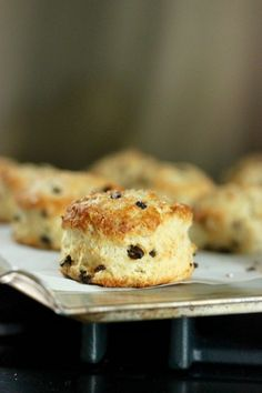 currant scones | passions to pastry