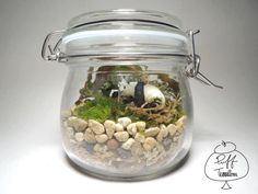 #panda #puffterrariums #recycle