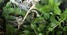 Herbal Baths: My New Favorite Cold-Weather Treat (Evelyn Hadden, author of Beautiful No-Mow Yards and Hellstrip Gardening)