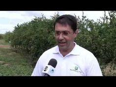 Fazenda Amway Nutrilite no Globo Rural