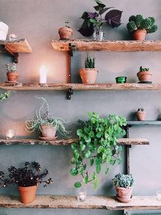 Natural wood shelves with plants and terracota planters. Interior Plants, Home Interior Design, Decoration Plante, House Plants Decor, Terracota, Plant Wall, Wood Shelves, Living Room Interior, Cozy House