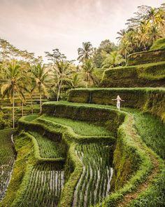 Tegalalang, Ubud, Bali, Indonesia