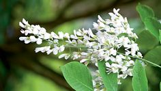 Why People Are Obsessed With Tree Blossoms  http://www.rodalesorganiclife.com/garden/why-people-are-obsessed-tree-blossoms
