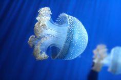 jellyfish by adjacency.deviantart.com on @deviantART