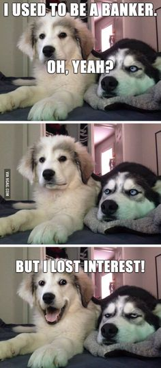 Just a little husky? Check out this list of the best exercises for the Siberian - Funny Husky Meme - Funny Husky Quote - The post Just a little husky? Check out this list of the best exercises for the Siberian appeared first on Gag Dad. Dog Jokes, Funny Dog Memes, Funny Animal Memes, Cute Funny Animals, Funny Animal Pictures, Memes Humor, Funny Images, Funny Photos, Funny Dogs