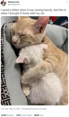 Cute Baby Cats, Cute Little Animals, Cute Cats And Kittens, Cute Animal Memes, Cute Funny Animals, Funny Cats, Silly Cats, Pretty Cats, Beautiful Cats
