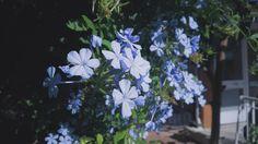 #çiçek #flower #vsco #vscocam #türk #mavi #güzel #yeşil #sunny #day #like #repin