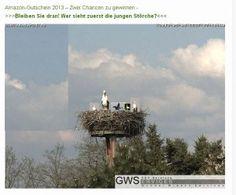 Spassvogel 2013 - so nicht mein Freund - Die Störche von Hohenstein