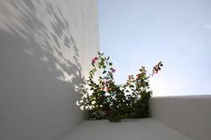Jardineras colgantes. (From Camilo Pulido Aquitectos)
