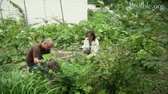 Designing your garden and your life with permaculture on Vimeo
