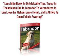 Enkele bijzondere feiten over het opvoeden, trainen en verzorgen van labradors…