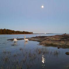 Finland, Seasons, Beach, Water, Outdoor, Food, Gripe Water, Outdoors, The Beach