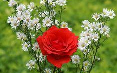 Có thể nói với Bộ sưu tập hình ảnh hoa hồng đẹp nhất 8/3 sau đây là sự chắt lọc từ những bức ảnh hoa đẹp nhất trên toàn thế giới mà chúng tôi đã sưu tầm với mong muốn đem lại niềm hạnh phúc nhỏ cho ngày Phụ Nữ Việt Nam