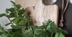 Rýmovníková mast         Jak jsem slibovala, po rýmovníkovém sirupu jsem se pustila i do rýmovníkové masti.   Zrovna se to hodilo, protož... Plants, Syrup, Flora, Plant, Planting