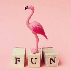Flamingo fun #flamingo