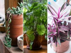 A pusztulófélben lévő növényeket is visszahozhatod a sírból egy új cseréppel. Indoor Plants, Glass Vase, Gardening, Decor, Gardens, Flowers, Inside Plants, Decoration, Lawn And Garden
