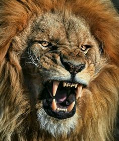 Yahusha - Lion of Yahudah!