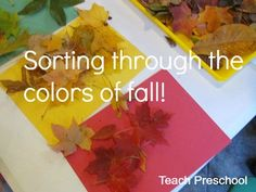 Week one or three - Sorting through the colors of fall by Teach Preschool Fall Preschool Activities, Preschool Science, Preschool Classroom, Preschool Crafts, Toddler Activities, Kindergarten, Teach Preschool, Sorting Activities, Classroom Ideas