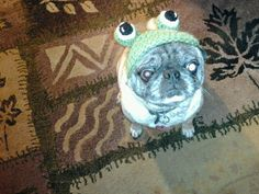 Here's my sista Franny's Rocko modeling a Frog Beanie I crochet for him..  Selling for $20.00 plus shipping and handling.. Can also be seen on Facebook and Etsy..