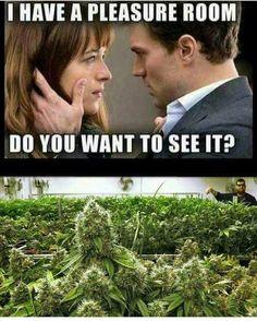 Buy Marijuana Online I Buy Weed and Cannabis Oil Online Funny Weed Memes, 420 Memes, Stoner Humor, Weed Humor, 420 Girls, Stoner Girl, Buy Weed, Smoking Weed, Medical Marijuana