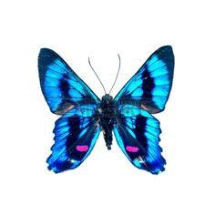 papillon: papillon Banque d