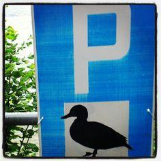 duck parking - @rocknroll_alien- #webstagram