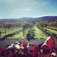 Autumn in the Napa Valley is a magical time. It's not too late to celebrate the season with our AUTUMN special. More details in the link 👆🏽 #autumn #visitnapavalley #beauty #nature #vineyardlife