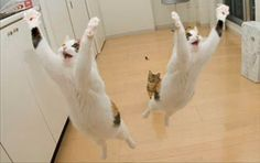 Flying cats!!! :) <3.