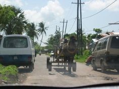 guyana transportation - A horse and buggie.
