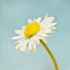 My HappyMaker : daisies - - - - - - - Retro Flower Photograph Pastel Flower Art 10 by MarascaPhotography, $18.00  #springflowerllove #lentelokker