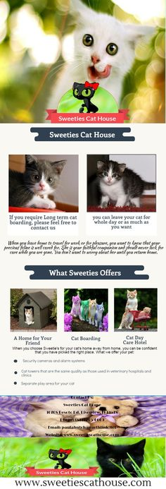 If you require Long term cat boarding, please feel free to contact us. With us, you can leave your cat for whole day or as much as you want. We take care of your pet and ensure secure environment to your loving pet.