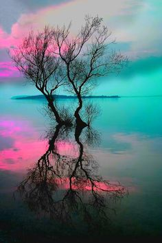 Beauty of nature | nature | | reflections |  #nature  https://biopop.com/