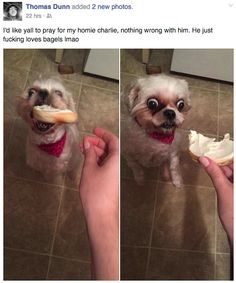Risultati immagini per Dump A Day Funny Animals Of The Day - 30 Pics Animal Jokes, Funny Animal Memes, Dog Memes, Cute Funny Animals, Funny Animal Pictures, Stupid Funny Memes, Funny Relatable Memes, Funny Fails, Cute Baby Animals