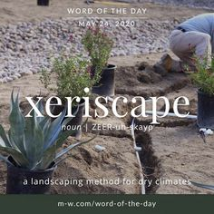 'Xeriscape' is the . Vocabulary Building, Vocabulary Words, Merriam Webster, Word Of The Day, English Lessons, Idioms, Some Words, Beautiful Words, Inspire Me