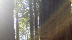 Forest bathing in the redwood forest in Oakland, CA