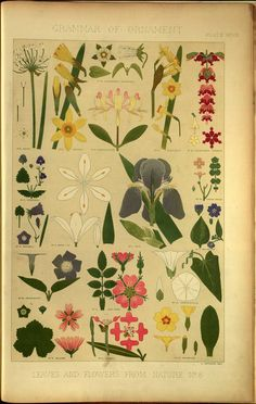 Owen Jones The grammar of ornament , 1856; Leaves and flowers from nature No 8. Various Flowers in Plan and Elevation.,  Image number:39088012147732_0317