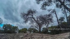 #timelapse #forest #bosque #loneliness #desert #alone #blue
