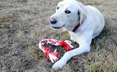 DIY T-Shirt Dog Toy Old t-shirts are the perfect materials for pet toys because they are soft and durable. You can make a quick and easy toy out of old t-shirts to entertain. Diy Projects For Dog Lovers, Animal Projects, I Love Dogs, Puppy Love, Diy Pour Chien, Pet Sitter, Diy Dog Toys, Pet Toys, Toy Diy