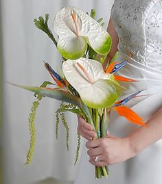 Strelitzia Archives - The Wedding Specialists