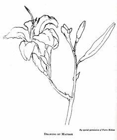 Henri Matisse - contour drawing