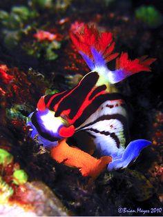 Nudibranch (Nembrotha Laying an egg rose. Underwater Creatures, Underwater Life, Ocean Creatures, Under The Water, Life Under The Sea, Beautiful Sea Creatures, Animals Beautiful, Wild Life, Beneath The Sea