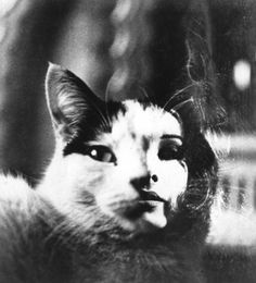 Book cover photo of a cat with a girl's face c.1965