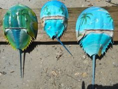 Acrylic Paint On Wood, Painting On Wood, Acrylic Paintings, Palm Frond Art, Palm Fronds, Beach Crafts, Diy Crafts, Crab Art, Crab Shells