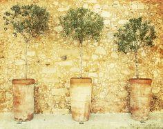 Three Trees, Greece, Travel Photography, Home Decor, Shabby Yellow, Green, Crete, Europe, Fine Art via Etsy