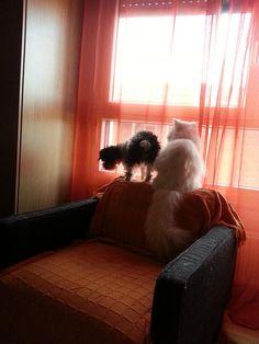 Los Curiosos #funny #cute #androidografia #fotografia #androidography Funny, Dogs, Gatos, Animales, Fotografia, Doggies, Ha Ha, Pet Dogs, Hilarious