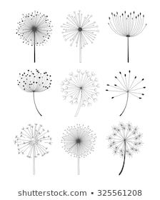 Find Abstract Dandelions Set Linear Style Monochrome stock images in HD and millions of other royalty-free stock photos, illustrations and vectors in the Shutterstock collection. Dandelion Drawing, Sunflower Drawing, White Dandelion, Dandelion Flower, Black And White Art Drawing, Illustration Botanique, Flower Backgrounds, Abstract Flowers, Free Vector Art
